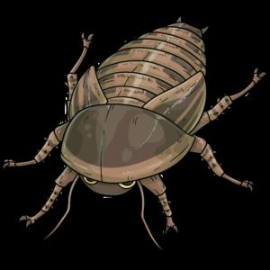 アルゼンチンモリゴキブリ