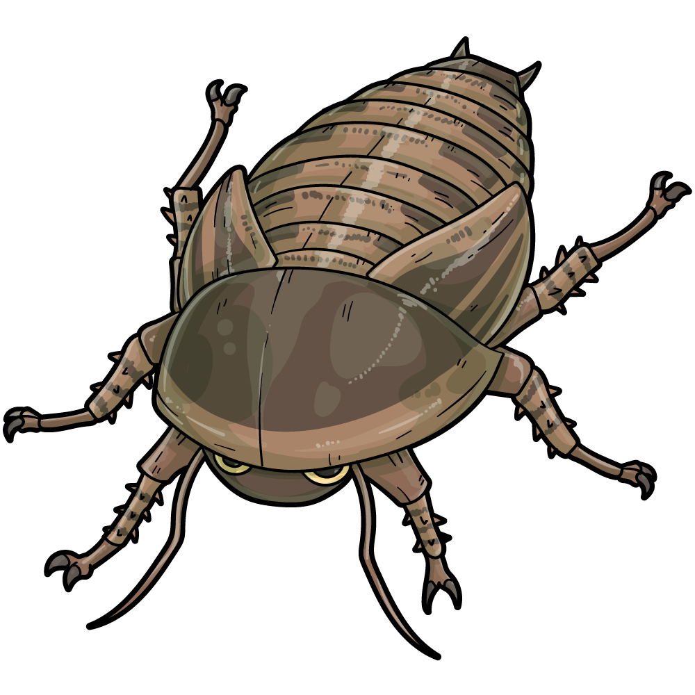 アルゼンチンモリゴキブリのイラスト