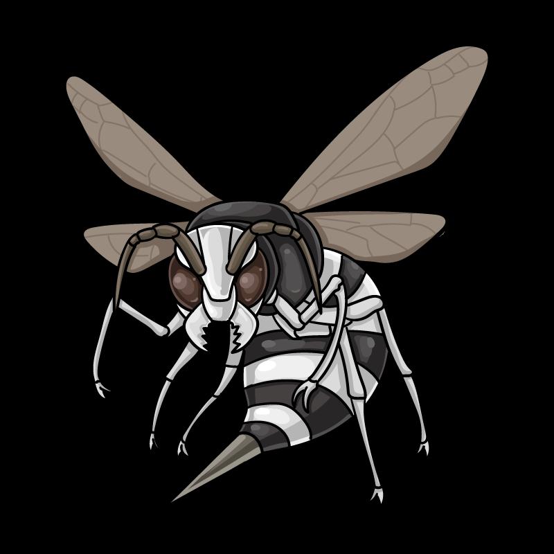 クロスズメバチのイラスト